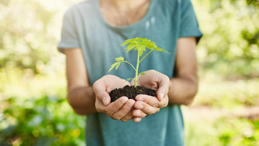 Eco salud